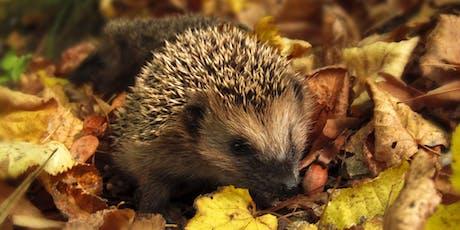 Making Hedgehog Houses / Creu Cartref y Draenog tickets