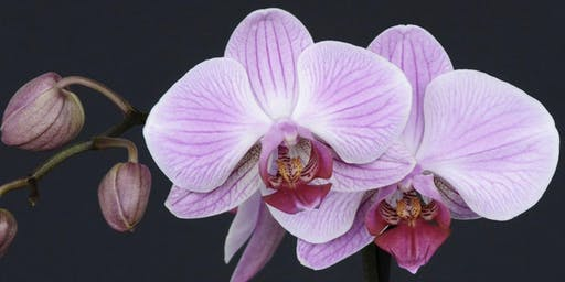Orchids Are Easy!