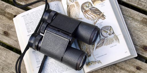 Birding and Journaling at Bombay Hook Wildlife Refuge