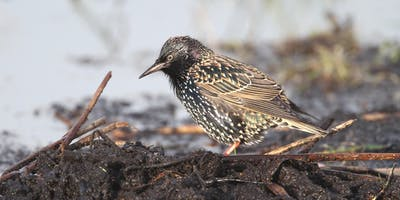 Super Starlings for Home Educated Children at RSPB Ham Wall