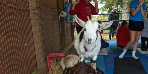 Goat Yoga At Nadeau Farm