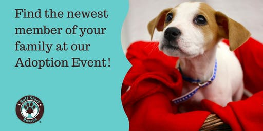 Burnsville Pet Supplies Plus Adoption Event