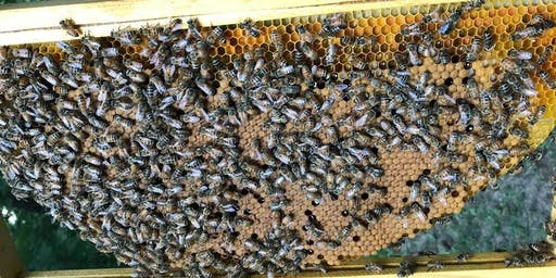 Beekeeping 101 ~ A three part series
