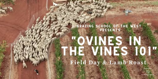 Ovines in the Vines 101 — Field Day & Lamb Roast