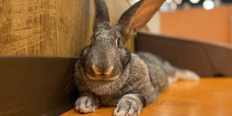 Diseases and Conditions of the Rabbit that You Need to Know tickets
