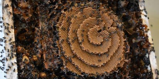 Bee Happy - Australia's Native Bees
