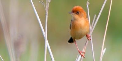 Photograph with an Artist Eyes :: Birds & Golden Light