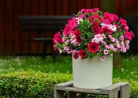 Morning Gardener:  Creating Fall Container Gardens