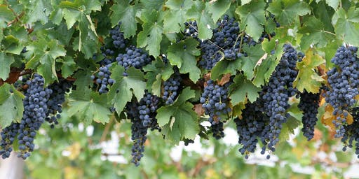 Adaptation to climate change  in viticulture and agriculture  McLaren Vale