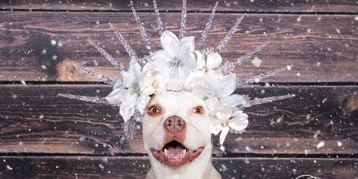Deck The Paws: Holiday Flower Crowns