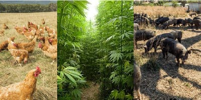 Biosecurity: Pigs, poultry, pest plants and industrial hemp