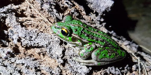 Become a WA frog scientist