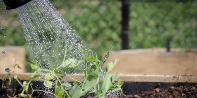 Water Wise Gardening with Bryony Bishop