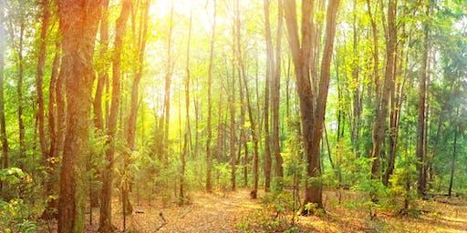 August Fineshade Wood Meditation Retreat