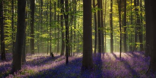 May Fineshade Wood Meditation Retreat