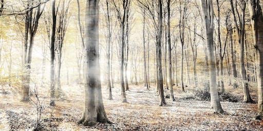 February Fineshade Wood Meditation Retreat