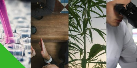 Cannabis Connect - Turning Problems Into Opportunities