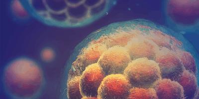 Talk: Interrogating mechanisms of lineage specification during gastrulation