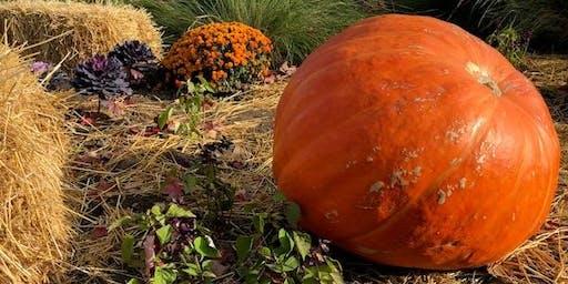 Pumpkin Preschoolers