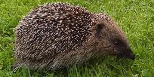 How to Help a Hedgehog (Ormskirk) #halftermfun