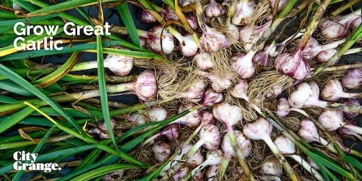 Grow Great Garlic