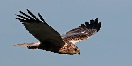 Marsh Harrier Survey & Breakfast  tickets