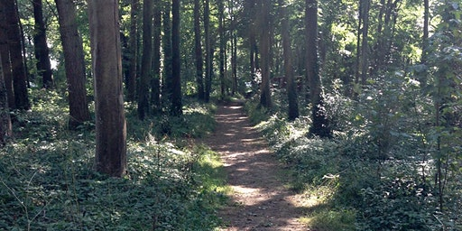 Woodland Wellbeing for Parents of Children with Mental Health Difficulties