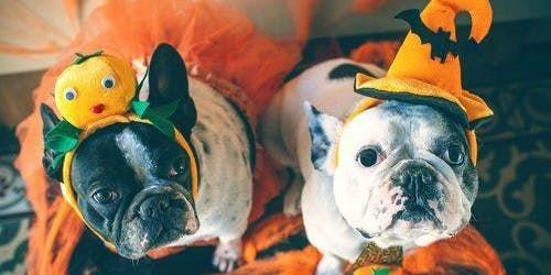 Halloween Event with New Albany Pet Rescue (New Albany)