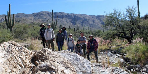 Saguaro Census Survey: Longer Hike December 7th  @ Saguaro East