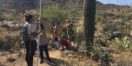 Saguaro Census Survey: Shorter Hike December 10th  @ Saguaro East tickets
