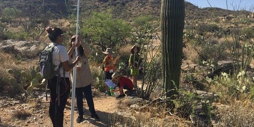 Saguaro Census Survey: Shorter Hike December 10th  @ Saguaro East