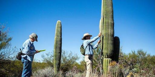 Saguaro Census Survey: Longer Hike January 11th  @ Saguaro West
