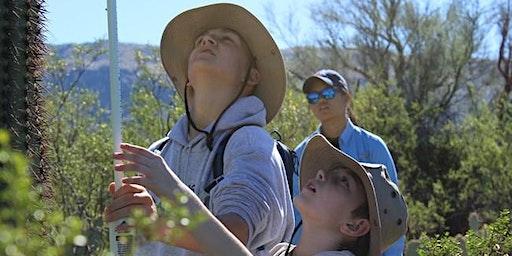 Saguaro Census Survey: Shorter Hike January 10th  @ Saguaro West