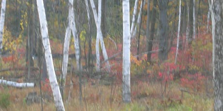 Oil Painting Course: Misty Birches tickets