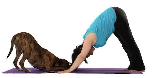 Doggie Yoga 4