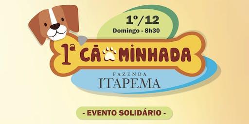 1º Cãominhada Fazenda Itapema Limeira