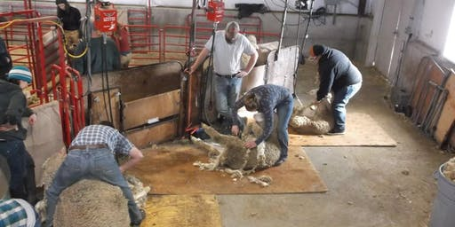 2020 Moffat County Sheep Shearing School