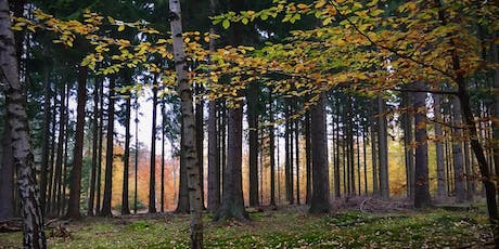 Forest bathing: embracing autumn mindfully tickets