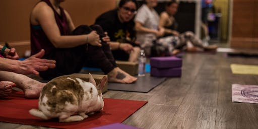 Bunny Yoga Fundraiser for House Rabbit Network @ The Crompton Collective