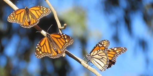Fourth Annual Monarch Butterflies Walk & Learn