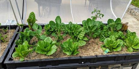 Summer Planting in the 5 Senses Garden Vegepods tickets