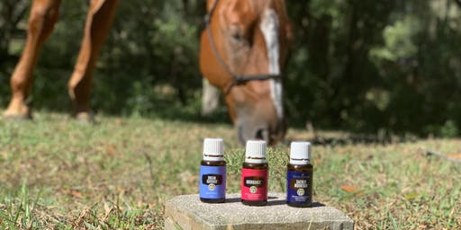Horses and Healing - A Journey of the Five Senses