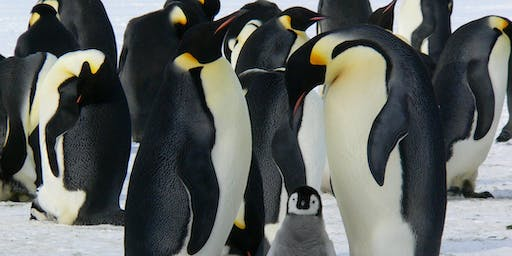Penguins, Coral Reefs and a Trip to Antarctica