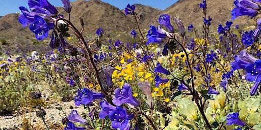Wildflower Bus Tour