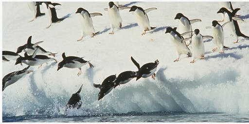 Penguin Riot Improv Show