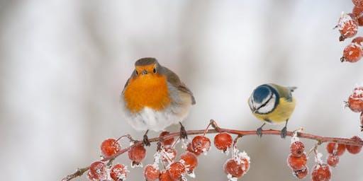 Winter Wildlife Wonders