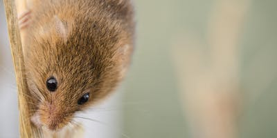 Harvest Mouse Day - Bampton, Oxfordshire