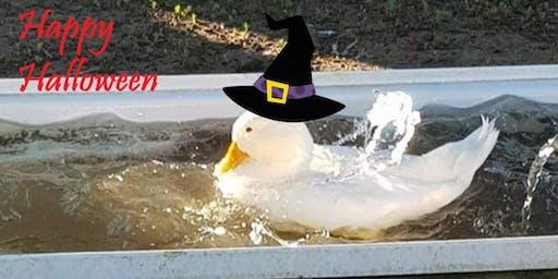 Halloween at Naragebup
