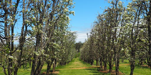 Orchard Blossoms at Core Cider