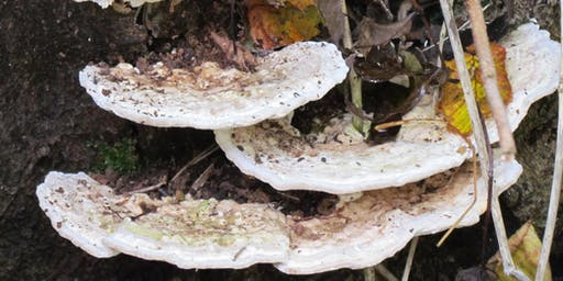 Fungi Foray : Badock's Wood